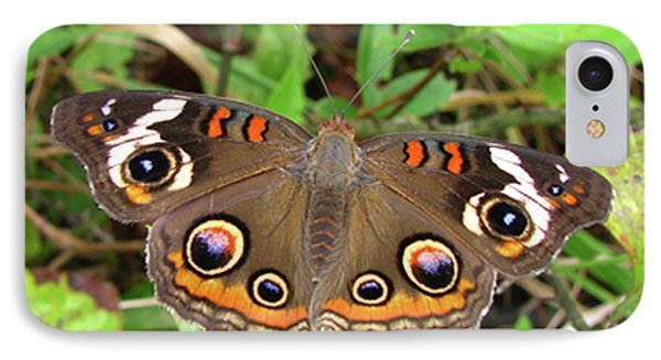 IPhone Case featuring the photograph Buckeye Butterfly by Donna Brown