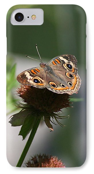 IPhone Case featuring the photograph Buckeye by Karen Silvestri
