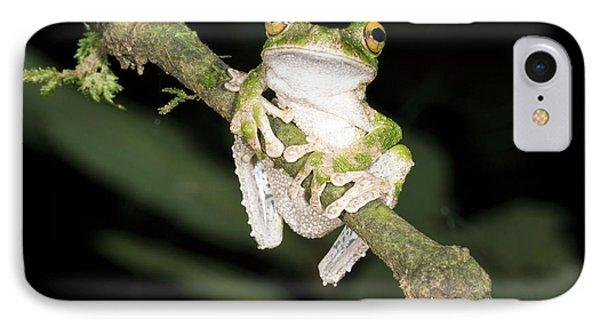 Buckley S Slender-legged Treefrog IPhone Case by Dr Morley Read