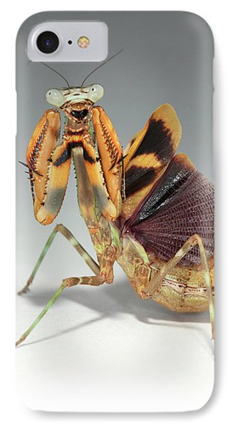 Budwing Mantis (parasphendale Agrionina) IPhone Case by Tomasz Litwin