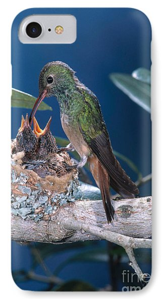 Buff-bellied Hummingbird At Nest IPhone Case by Anthony Mercieca
