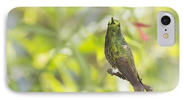 Buff-tailed Coronet Hummingbird IPhone Case