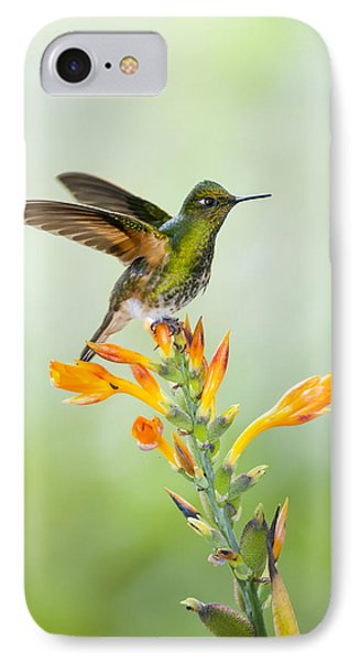 Buff-tailed Coronet Hummingbird IPhone Case by Tui De Roy
