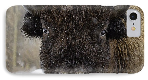 IPhone Case featuring the photograph Buffalao In Snow by Susi Stroud