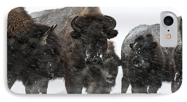 Buffalo - Yellowstone Family Portrait IPhone Case by Wildlife Fine Art