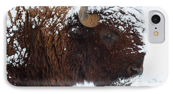 Buffalo Nickel IPhone Case by Jim Garrison