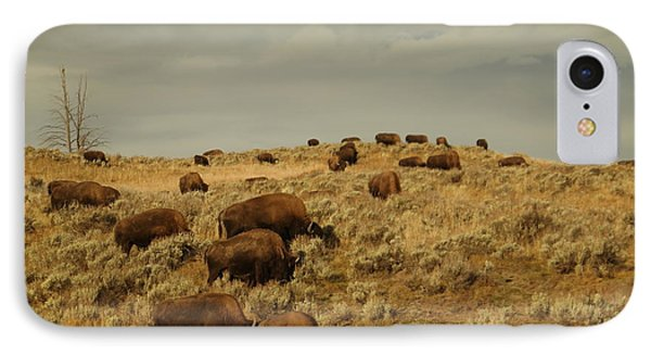 Buffalo On The Prairie IPhone Case by Jeff Swan
