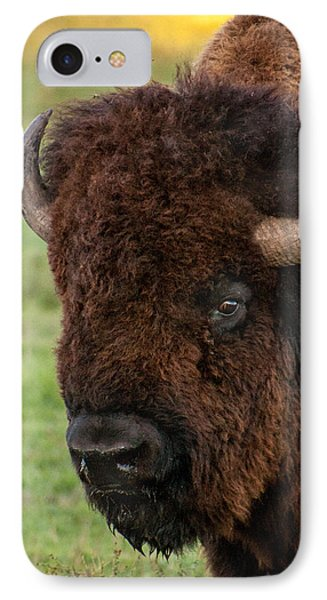 IPhone Case featuring the photograph Buffalo Portrait by Dawn Romine