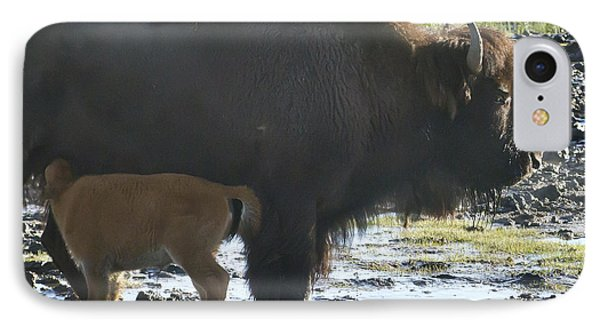 Bufffalo Cow Nursing A Red Dog-signed-#2186 IPhone Case by J L Woody Wooden