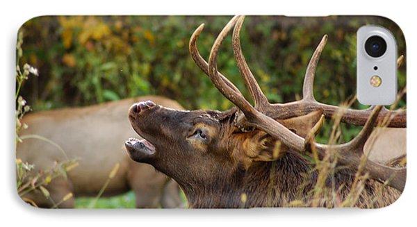 Bugling Bull Elk IPhone Case by Patrick Shupert
