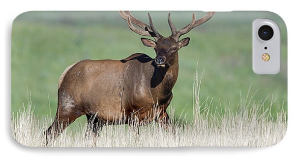 IPhone Case featuring the photograph Bull Elk In Velvet by Jack Bell