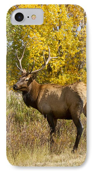 Bull Elk With Autumn Colors Phone Case by James BO  Insogna