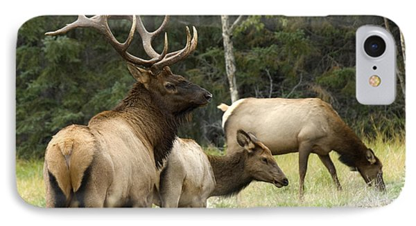 Bull Elk With His Harem Phone Case by Bob Christopher