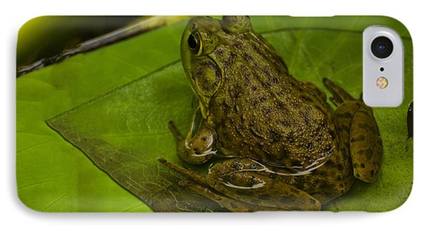 bull frog on a Lilly pad IPhone Case