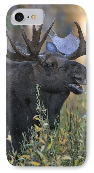 Bull Moose Calling Phone Case by Gary Langley