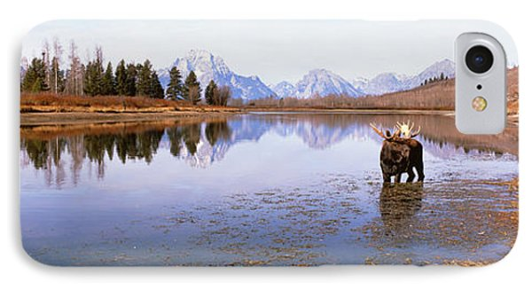 Bull Moose Grand Teton National Park Wy IPhone Case by Panoramic Images