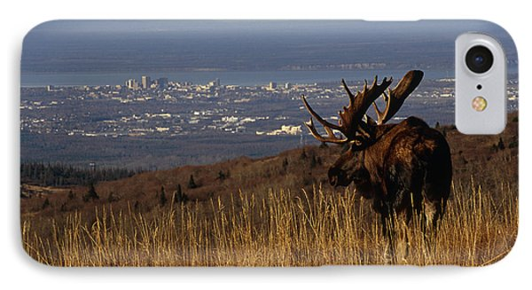 Bull Moose Grazing & Resting On IPhone Case