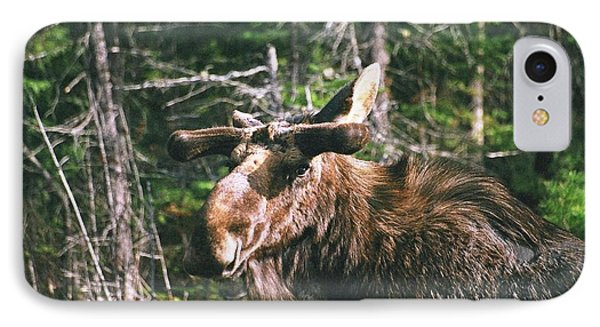 IPhone Case featuring the photograph Bull Moose In Spring by David Porteus