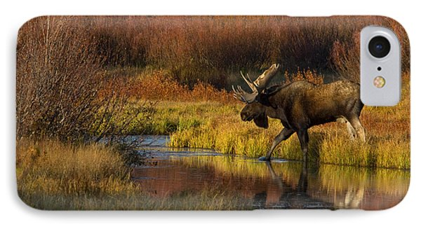 Bull Moose Phone Case by Thomas and Pat Leeson