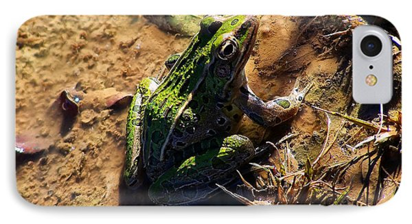 Bullfrog 2 IPhone Case