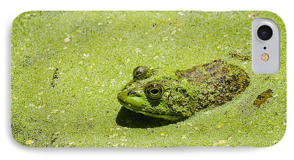 IPhone Case featuring the photograph Bullfrog In Duckweed by Bradley Clay