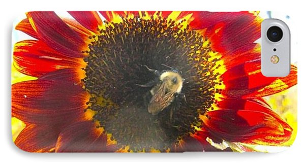 Bumble Bee In Sunflower IPhone Case by Kathryn Barry