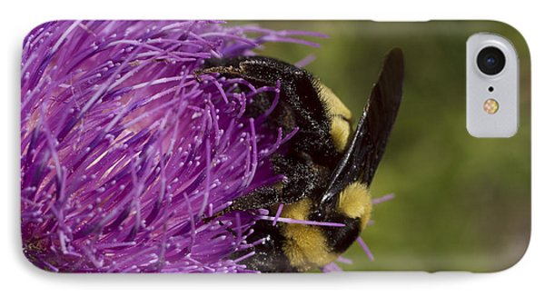 Bumble Bee On Thistle IPhone Case by Shelly Gunderson