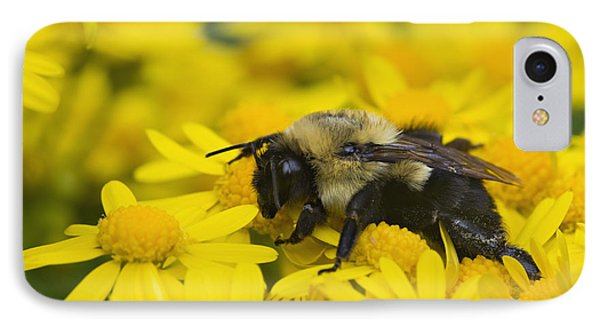 Bumblebee - D008456 IPhone Case by Daniel Dempster