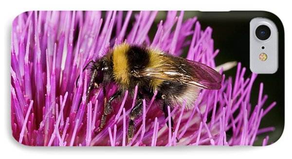 Bumblebee Feeding On Thistle Flower IPhone Case by Bob Gibbons
