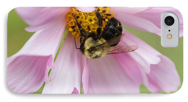 Bumblebee On A Blossom IPhone Case