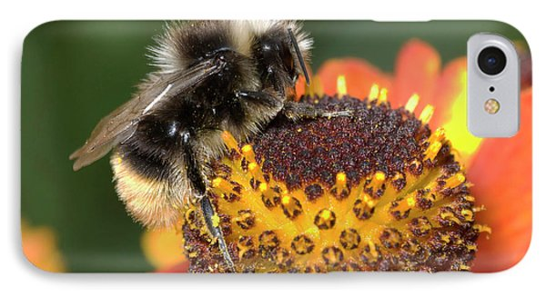Bumblebee On A Flower IPhone Case by Nigel Downer