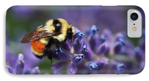 Bumblebee On Lavender IPhone Case by Rona Black