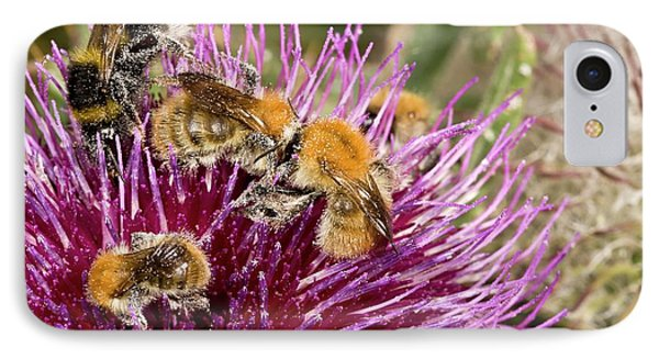Bumblebees Feeding On Thistle Flower IPhone Case by Bob Gibbons
