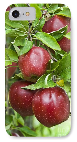 Bunch Of Red Apples Phone Case by Anthony Sacco