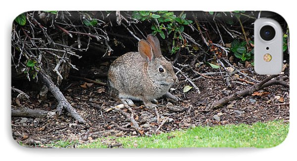 IPhone Case featuring the photograph Bunny In Bush by Debra Thompson