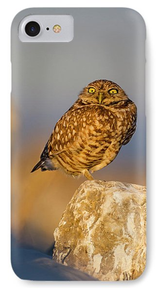 Burrowing Owl (athene Cunicularia IPhone Case