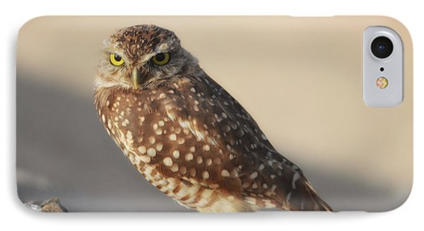 Burrowing Owl  IPhone Case by Donna Greene
