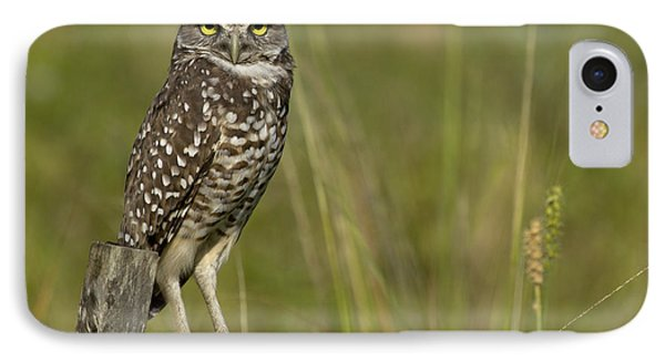 Burrowing Owl Stare IPhone Case by Meg Rousher