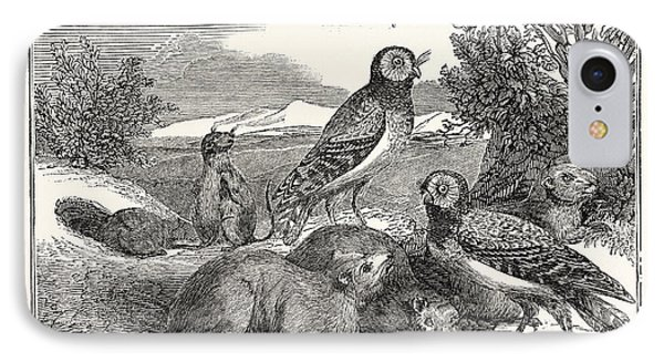 Burrowing-owls And Prairie-dogs IPhone Case by English School