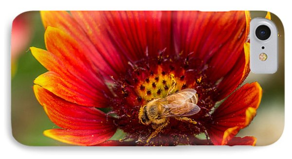 IPhone Case featuring the photograph Burst Of Color by Kathleen Scanlan