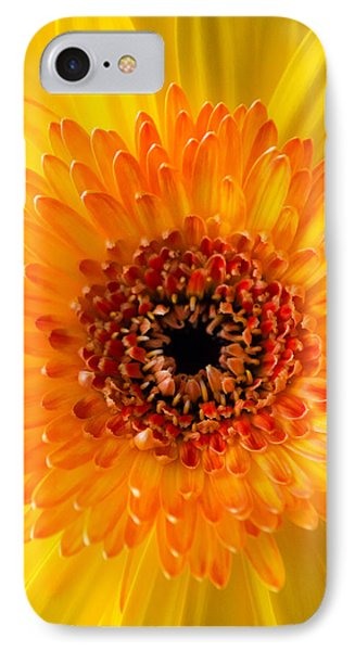 Burst Of Sunshine IPhone Case by Shelby  Young