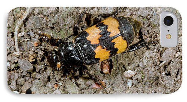 Burying Beetle IPhone Case by Bob Gibbons