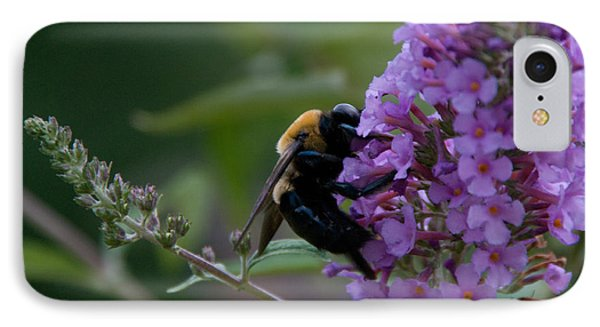 Busy Bee IPhone Case by Greg Graham