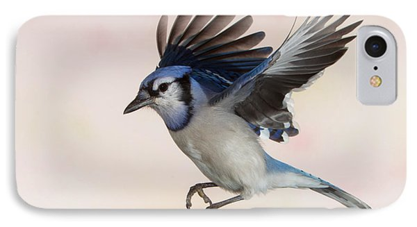 IPhone Case featuring the photograph Busy Billy Blue Jay by Gerry Sibell