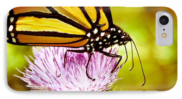 IPhone Case featuring the photograph Busy Butterfly by Cheryl Baxter