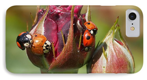 Busy Ladybugs IPhone Case by Rona Black