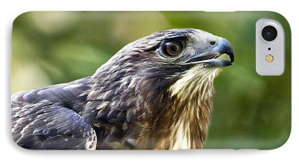 Buteo Jamaicensis Phone Case by Christina Rollo