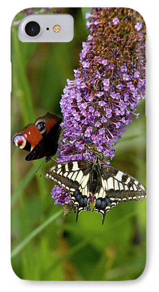 Butterflies Feeding On Buddleia Flowers IPhone Case by Bob Gibbons
