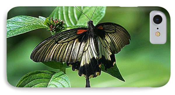 IPhone Case featuring the photograph Butterfly 2 by Kathy Churchman