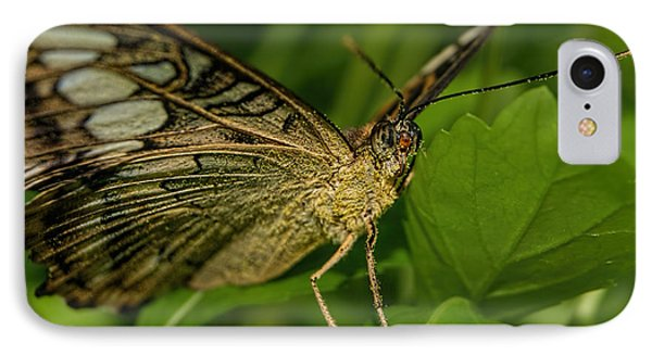 IPhone Case featuring the photograph Butterfly 2 by Olga Hamilton